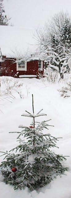 A winter day...beautiful....
