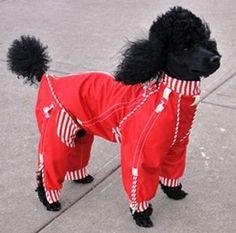 About dog coats on pinterest dog coats dog suit and dog jacket