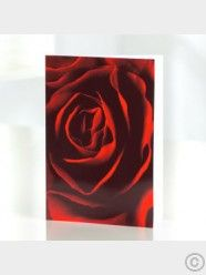 Red Rose Greetings Card