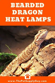 Best Basking Light for Bearded Dragons - (Complete Guide) Bearded Dragon Heat Lamp, Bearded Dragon Lighting, Bearded Dragon Cute, Reptile Heat Lamp, Reptile Supplies, Cute Reptiles, Light Well, Pet Store, Animaux