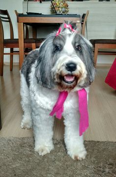 Cookie, pronta pra passear