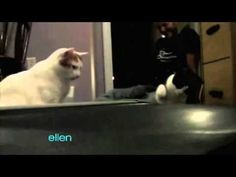 Cat Week at The Ellen Show, I use this as a laugh break