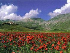 Monti Sibillini - Fioritura di papaveri