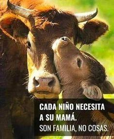 Cow, Vegan, Animals, Children In Need, Animales, Animaux, Cattle, Animal, Animais