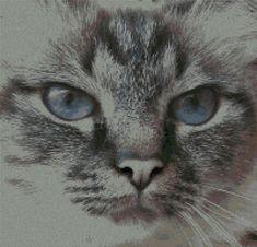 Gorgeous cat, found on : http://www.schemipuntocrocegratis.it/foto/schemi_misti/animali_terra/micio_gatto_05.pdf