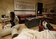 Lady Dinahs Cat Emporium While space is dominated by a cafe setting, there is also a great deal of room employed purely for people to play with cats, and to let the cats play themselves with toys