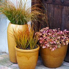 Entry Way Pots-Harvest gold hues Orange-striped blades of grass, apricot-tinged leaves with purple undersides, and matching gold containers make for autumn-inspired pots. More: Harvest gold fall containers Container Design, Container Plants, Container Gardening, Flower Gardening, Outdoor Pots, Outdoor Living, Outdoor Stuff, Outdoor Spaces, Fall Potted Plants
