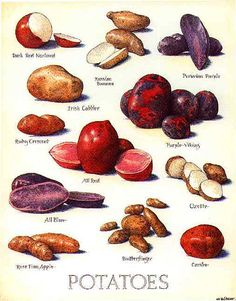 poster-potato | yujunjon | Flickr Yam Or Sweet Potato, Types Of Potatoes, Cooking Tips, Cooking Recipes, Real Food Recipes, Healthy Recipes, Food Charts, Fruit And Veg, Food Illustrations
