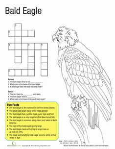 Second Grade Animals Vocabulary Worksheets: Bald Eagle Facts Eagle Facts, Worksheets For Kids, Coloring Worksheets, Vocabulary Worksheets, Eagle Craft, Bird Facts, Outdoor Education, National Symbols, Animal Science
