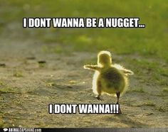Funny Animal Pictures With Captions ... Forums • View topic - Cute Animals That Are Not Dogs Or Cats #JustDogs,Yipee!