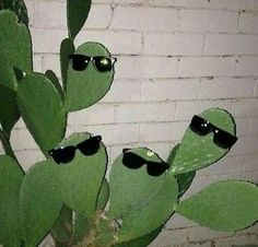 this was already saved to sundara fuck apparently but this is phoebe's plants