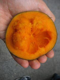 Matisia cordata / Bombacacae    AKA: Sapota-do-solimões, zapote de monte, mamey colorado (Venezuela), sapote, zapote chupa chupa (Colômbia), sapota, milinillo (Ecuador), zapote (Peru); Po: sapota, sapota-do-peru; En: sapote; Fr: sapote du Pérou.  (wikipédia)