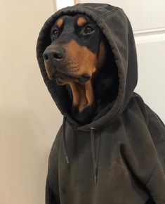 Shared by Anastasia. Find images and videos about dog and hoodie on We Heart It - the app to get lost in what you love. Doberman Pinscher Dog, Doberman Dogs, Dobermans, Cute Baby Animals, Animals And Pets, Funny Animals, Cute Puppies, Cute Dogs, Dogs And Puppies