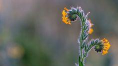 Wild Flower by Jeff Turner on 500px