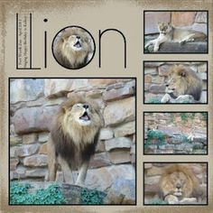 """zoo scrapbook layout--like the photo inside the """"O"""" would change title to ZOO…"""
