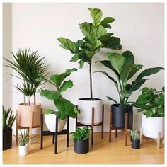 Large Mid Century Modern Planter with Plant Stand, Modern Plant Pot, Wood Planter Stand - Ceramic Pot - Bring nature inside your home with home plants. There are home plants in all sorts, sizes and s - Modern Planters, Wood Planters, Succulent Planters, Succulents Garden, Plantas Indoor, Belle Plante, Decoration Plante, Home Decoration, Tree Decorations