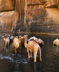 Why Now Is the Time to Visit Chad