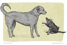 dog body language, canine communication, freezing, stillness, The Canine Ladder of Agression My Best Friend, Best Friends, Dog Body Language, Dogs And Kids, Dog Friends, Pet Care, Moose Art, Frozen, Old Things