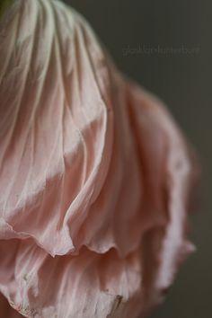 glasklar & kunterbunt: Mohnblüte