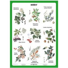 Kríky Autumn Activities For Kids, Montessori Materials, Brain Training, Science And Nature, Botanical Illustration, Botany, Kids Learning, Education, Drawings