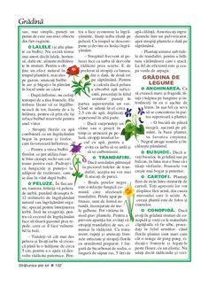 Kitchen Hacks, Household, Cleaning, Garden, Books, Plant, Garten, Libros, Lawn And Garden