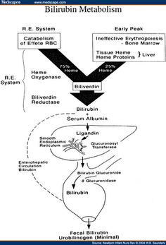 Bilirubin metabolism for Dummies  A Hepatic Lovestory- Hemoglobin broke up with Bilirubin so the unconjugated & single(and oh dear,heartbroken!) Bilirubin went to Club Liver & hooked up with Albumin but decided she wanted to hook up with Hepatocyte cos he was the stud and conjugated with him.