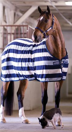 "Rambo Newmarket Stable Rug-The Rambo Newmarket Stable Rug is a stylish piece of ""apparel"" for your horse."