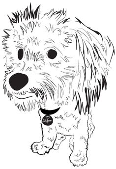 Maltipoo -- Charity Pups raises awareness and dollars for a different animal-related non-profit each month through dog illustrations. www.charitypups.com #dog #illustration #cute #maltipoo #adorable #puppy