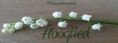 Good Morning Girls NEDERLAND: Hooglied in Vogelvlucht