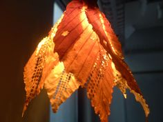 Global temperature anomalies since 1850, laser cut into Beech leaves, wrapped to form a light shade. By Annelie Berner