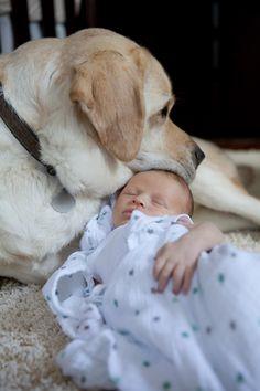 Baby's Best Friend  |  amie fedora photography