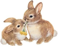 Dwarf Aries Rabbit NHD - Tips and. Pictures for indoor u. Outdoor keeping - video / cage keeping? Dwarf Aries Rabbit NHD - Tips and. Pictures for indoor u. Bunny Art, Cute Bunny, Stuffed Animals, Animal Pictures, Cute Pictures, Lapin Art, Baby Animals, Cute Animals, Bunny Images