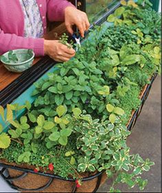 Click pic for 35 Container Gardeing Ideas - Window Box Herb Garden | DIY Spring Garden Projects