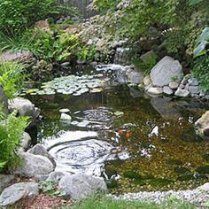 How to Keep Water Clear in Fountains and Ponds