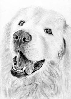 Rysunek psa owczarek podhalański.