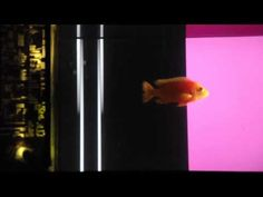 Dag+is+a+DJ+-+a+fish+is+playing+electronic+music+in+live+-+http%3A%2F%2Fbest-videos.in%2F2013%2F01%2F19%2Fdag-is-a-dj-a-fish-is-playing-electronic-music-in-live%2F