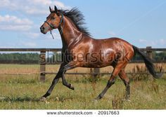 beautiful horse on the ranch