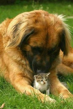 608 Best Cute Dog And Cat Pictures Images In 2019 Dog Cat Pets