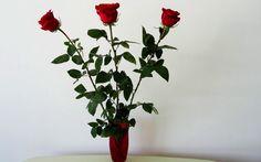 Trei metode simple de înrădăcinare a trandafirilor din buchetul primit cadou! - Pentru Ea Organic, House, Plant, Home, Homes, Houses