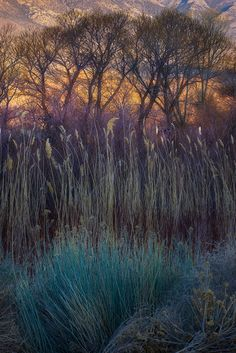 'Morning Fields' photo by Marc Adamus