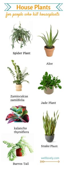 House Plants.png