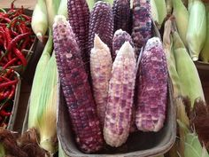Hmong corn, an Asian sticky corn used in puddings