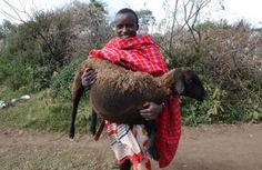 In the northern part of Mount Kenya, there is an indigenous community the Il Lakipiak Maasai ( People of Wildlife ) which owns and operates the only community-owned rhino sanctuary in the country. They have managed to alleviate the human-wildlife conflicts that arise in the area due to the intrusion of wild animals searching for [...] The post The Indigenous 'People of Wildlife' Know How to Protect Nature appeared first on iCrowdNewswire.