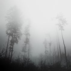 Eerie Nature Photography by Jürgen Heckel via abduzeedo.com