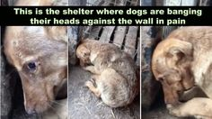 The imagine of this dog is truly heartbreaking and I just can't get it out of my head. This seven-month-old baby cries in p...