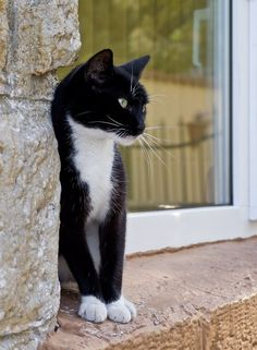 """""""The ideal of calm exists in a sitting cat."""" --Jules Reynard"""