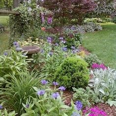 Perennial Flower Bed With Boxwoods Lambs Ear Daylillies Phlox Yarrow Ivy