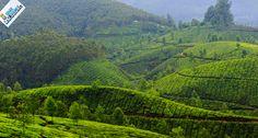 Munnar in Kerala, read about our kerala trip at http://www.idharbhighumlo.com/kerala-trip-experience/