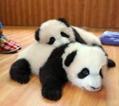 Love Panda #Panda