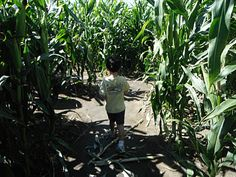BIG Horse Corn Maze in Temecula - during the month of October